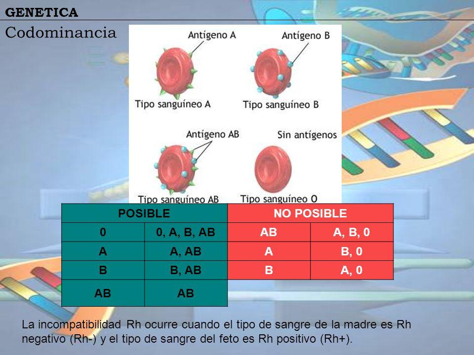 GENETICA Codominancia POSIBLENO POSIBLE 00, A, B, ABABA, B, 0 AA, ABAB, 0 BB, ABBA, 0 AB La incompatibilidad Rh ocurre cuando el tipo de sangre de la