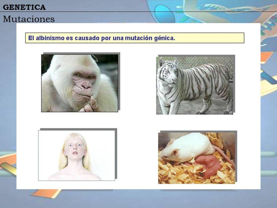 GENETICA Mutaciones