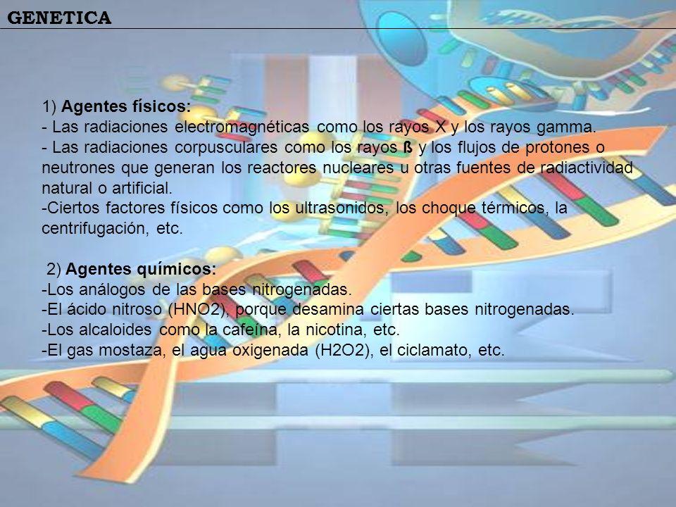 GENETICA 1) Agentes físicos: - Las radiaciones electromagnéticas como los rayos X y los rayos gamma. - Las radiaciones corpusculares como los rayos ß