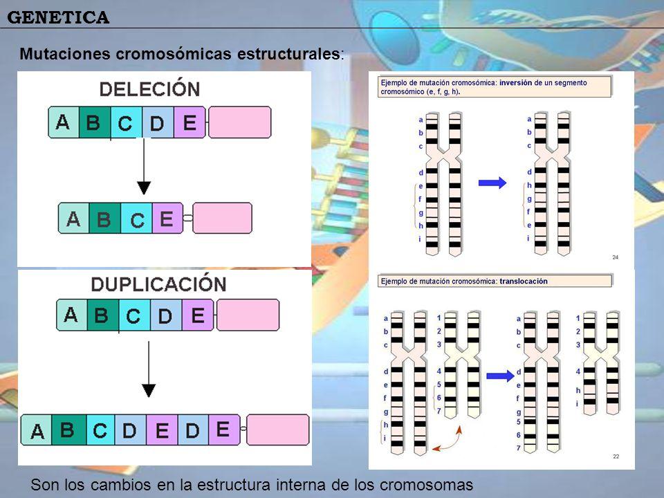 GENETICA Mutaciones cromosómicas estructurales: Son los cambios en la estructura interna de los cromosomas