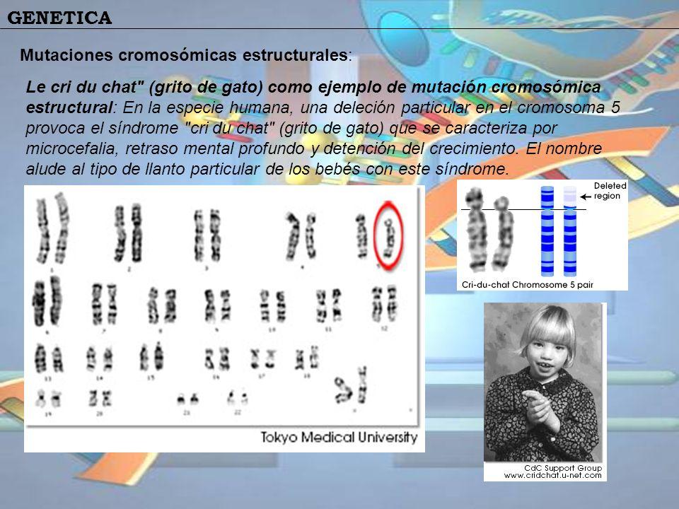 GENETICA Mutaciones cromosómicas estructurales: Le cri du chat