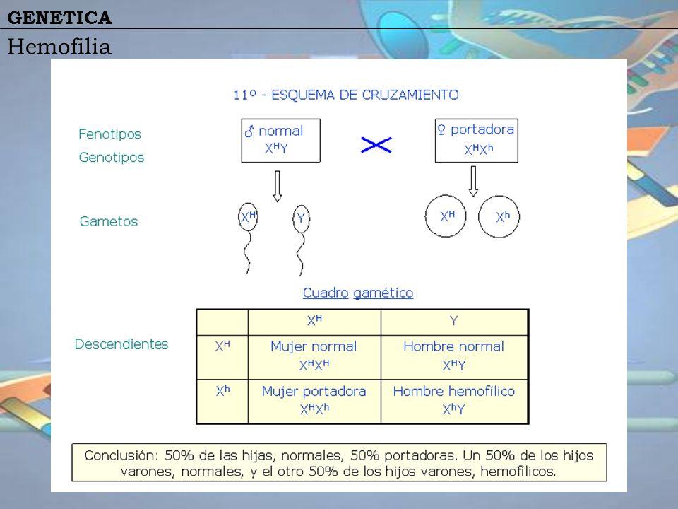 GENETICA Hemofilia