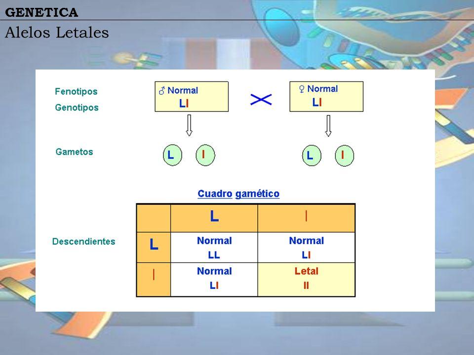 GENETICA Alelos Letales