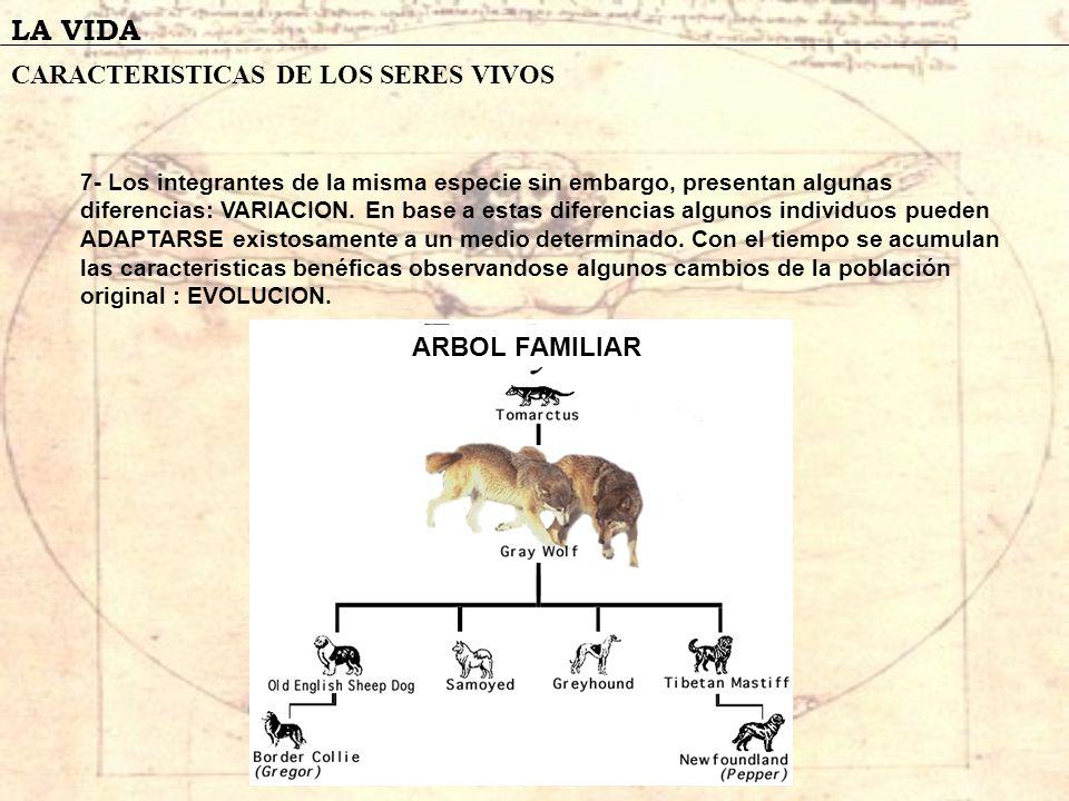 LA VIDA CARACTERISTICAS DE LOS SERES VIVOS 7- Los integrantes de la misma especie sin embargo, presentan algunas diferencias: VARIACION. En base a est