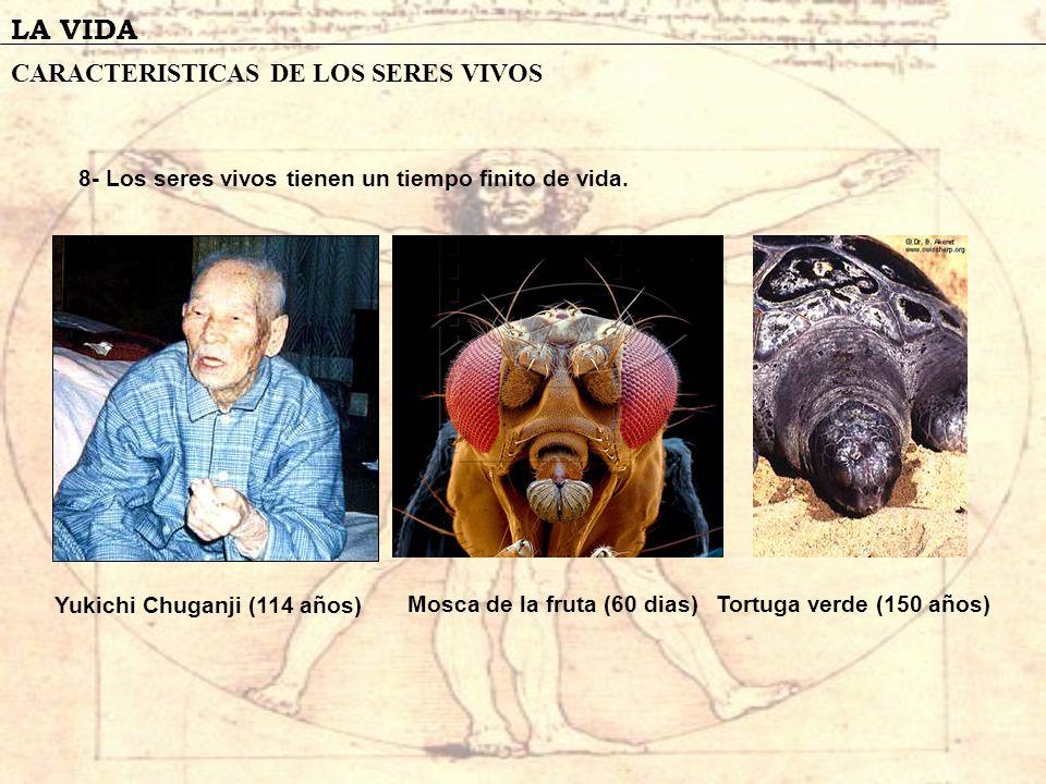 LA VIDA CARACTERISTICAS DE LOS SERES VIVOS 8- Los seres vivos tienen un tiempo finito de vida. Yukichi Chuganji (114 años) Mosca de la fruta (60 dias)