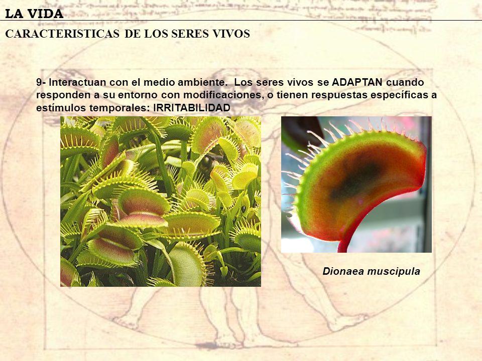 LA VIDA CARACTERISTICAS DE LOS SERES VIVOS 9- Interactuan con el medio ambiente. Los seres vivos se ADAPTAN cuando responden a su entorno con modifica