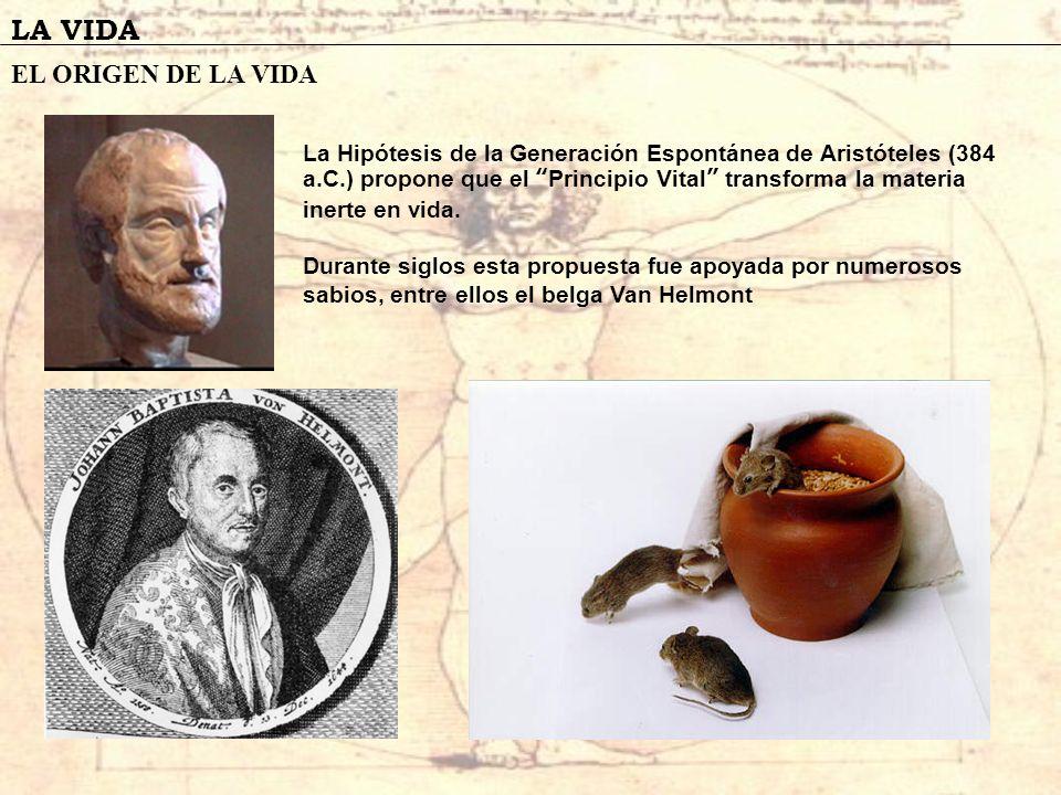 LA VIDA EL ORIGEN DE LA VIDA La Hipótesis de la Generación Espontánea de Aristóteles (384 a.C.) propone que el Principio Vital transforma la materia i