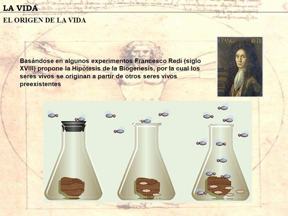 LA VIDA EL ORIGEN DE LA VIDA Basándose en algunos experimentos Francesco Redi (siglo XVIII) propone la Hipótesis de la Biogenesis, por la cual los ser