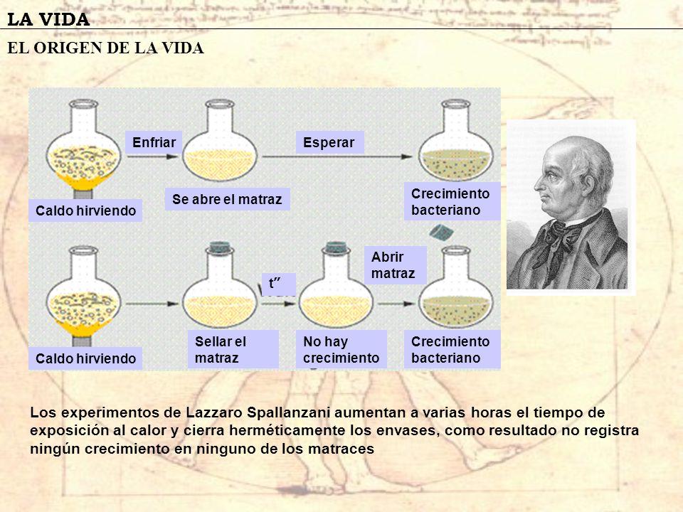 LA VIDA EL ORIGEN DE LA VIDA Los experimentos de Lazzaro Spallanzani aumentan a varias horas el tiempo de exposición al calor y cierra herméticamente