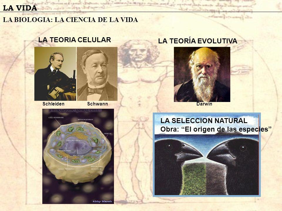 LA VIDA LA BIOLOGIA: LA CIENCIA DE LA VIDA LA TEORIA CELULAR SchleidenSchwannDarwin LA SELECCION NATURAL Obra: El origen de las especies LA TEORÍA EVO