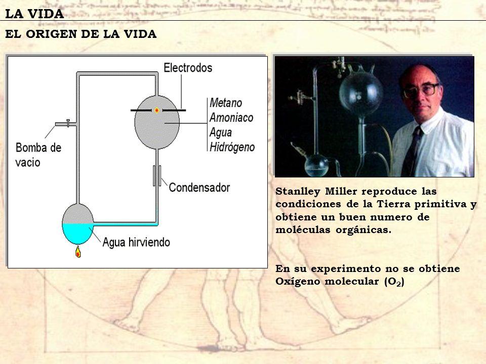 LA VIDA EL ORIGEN DE LA VIDA Stanlley Miller reproduce las condiciones de la Tierra primitiva y obtiene un buen numero de moléculas orgánicas. En su e
