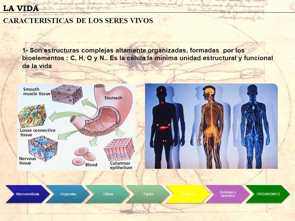 LA VIDA CARACTERISTICAS DE LOS SERES VIVOS 1- Son estructuras complejas altamente organizadas, formadas por los bioelementos : C, H, O y N.. Es la cél