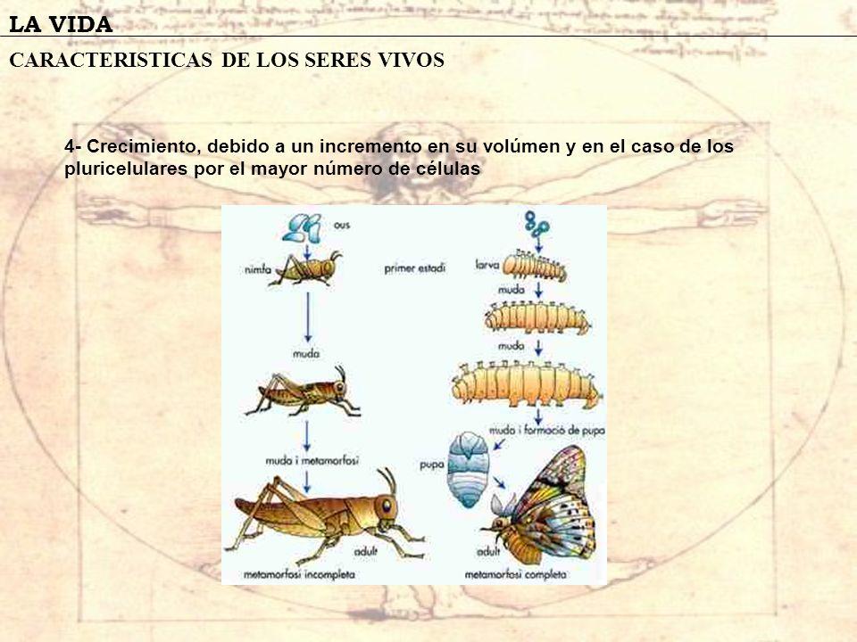 LA VIDA EL ORIGEN DE LA VIDA Sin embargo ante la negativa de los vitalistas de aceptar la teoria de Redi, ingresa a la polemica el sabio francés Louis Pasteur.