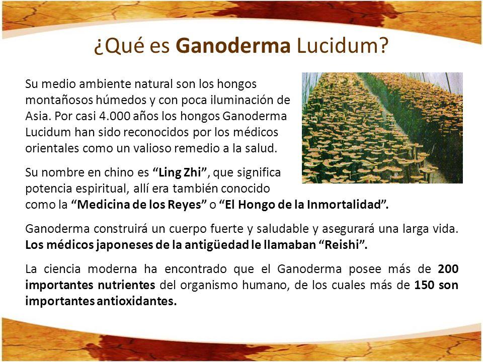 ¿Qué es Ganoderma Lucidum? Su medio ambiente natural son los hongos montañosos húmedos y con poca iluminación de Asia. Por casi 4.000 años los hongos