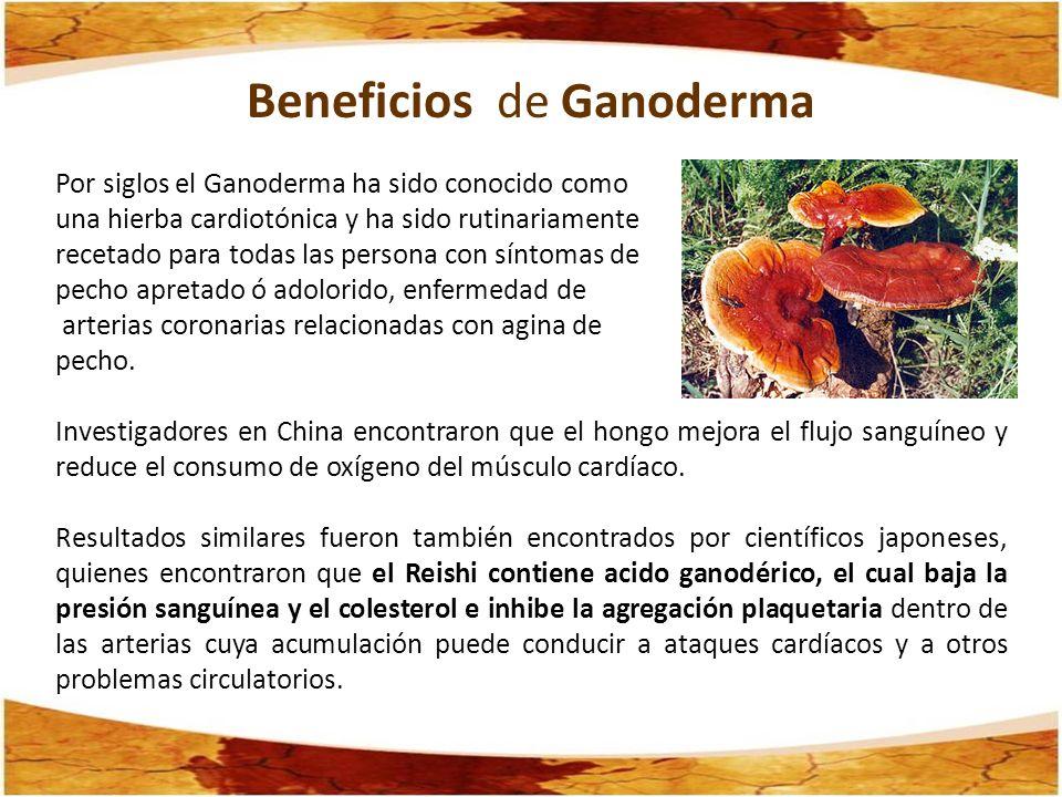 Beneficios de Ganoderma Por siglos el Ganoderma ha sido conocido como una hierba cardiotónica y ha sido rutinariamente recetado para todas las persona