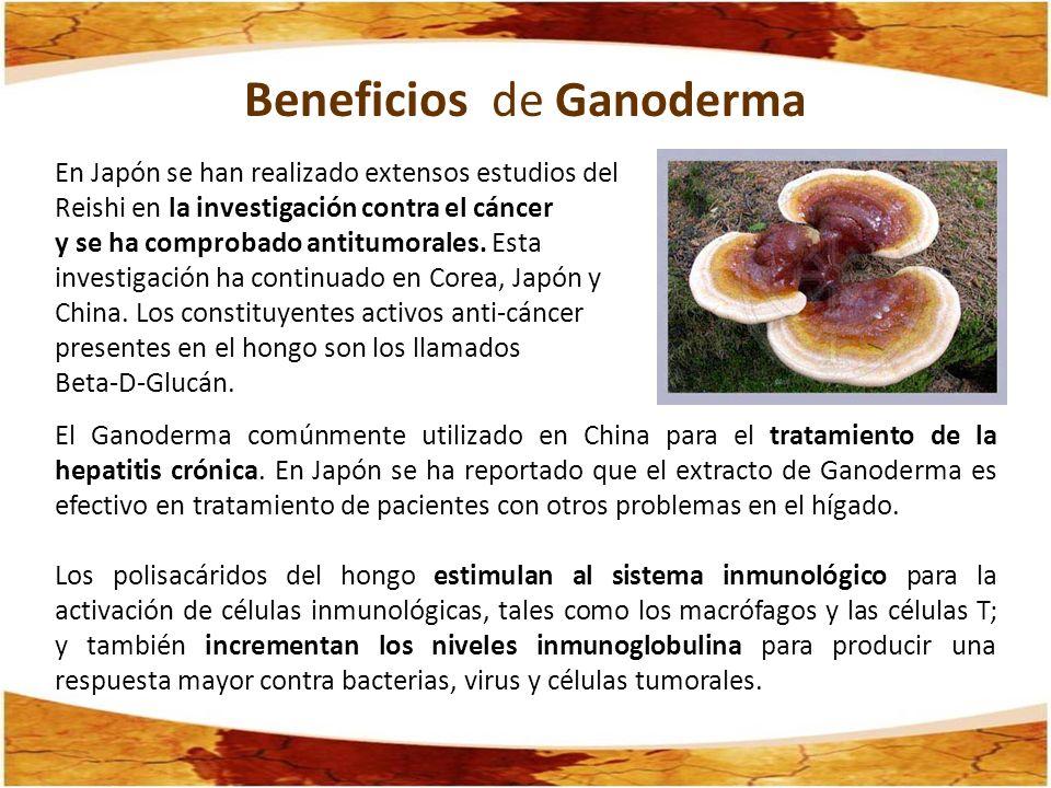 Beneficios de Ganoderma En Japón se han realizado extensos estudios del Reishi en la investigación contra el cáncer y se ha comprobado antitumorales.