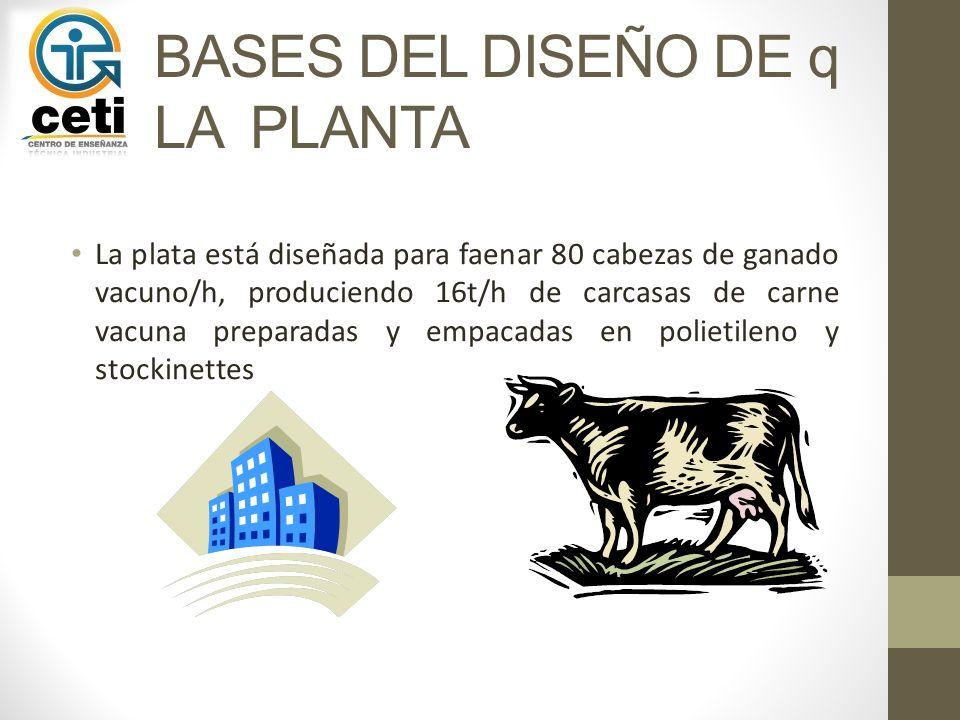 BASES DEL DISEÑO DE q LA PLANTA La plata está diseñada para faenar 80 cabezas de ganado vacuno/h, produciendo 16t/h de carcasas de carne vacuna prepar