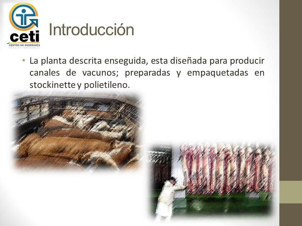 Introducción La planta descrita enseguida, esta diseñada para producir canales de vacunos; preparadas y empaquetadas en stockinette y polietileno.