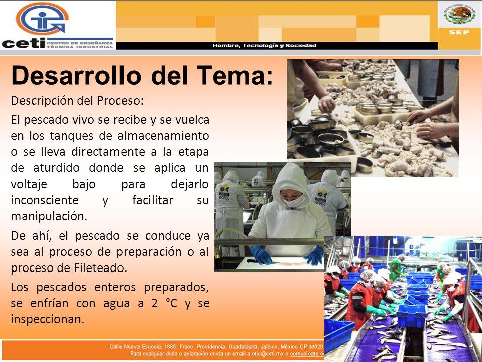 Desarrollo del Tema: Descripción del Proceso: El pescado vivo se recibe y se vuelca en los tanques de almacenamiento o se lleva directamente a la etapa de aturdido donde se aplica un voltaje bajo para dejarlo inconsciente y facilitar su manipulación.