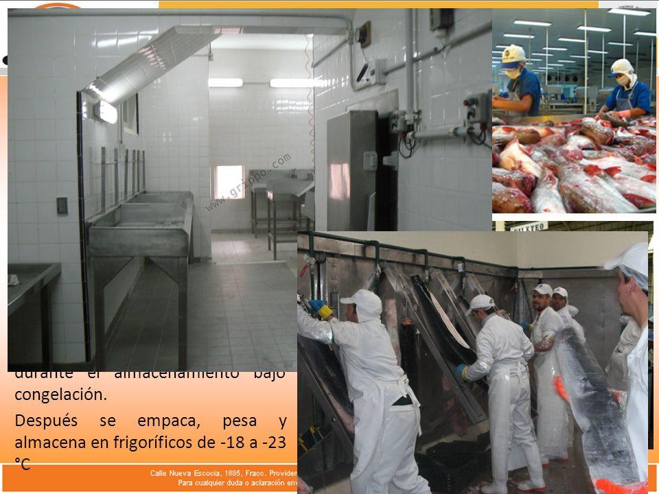 Desarrollo del Tema: Descripción del Proceso: Posteriormente se clasifican por tamaños y se mantienen en cámaras frigoríficas a 2 °C o se colocan en la banda que va al congelador.