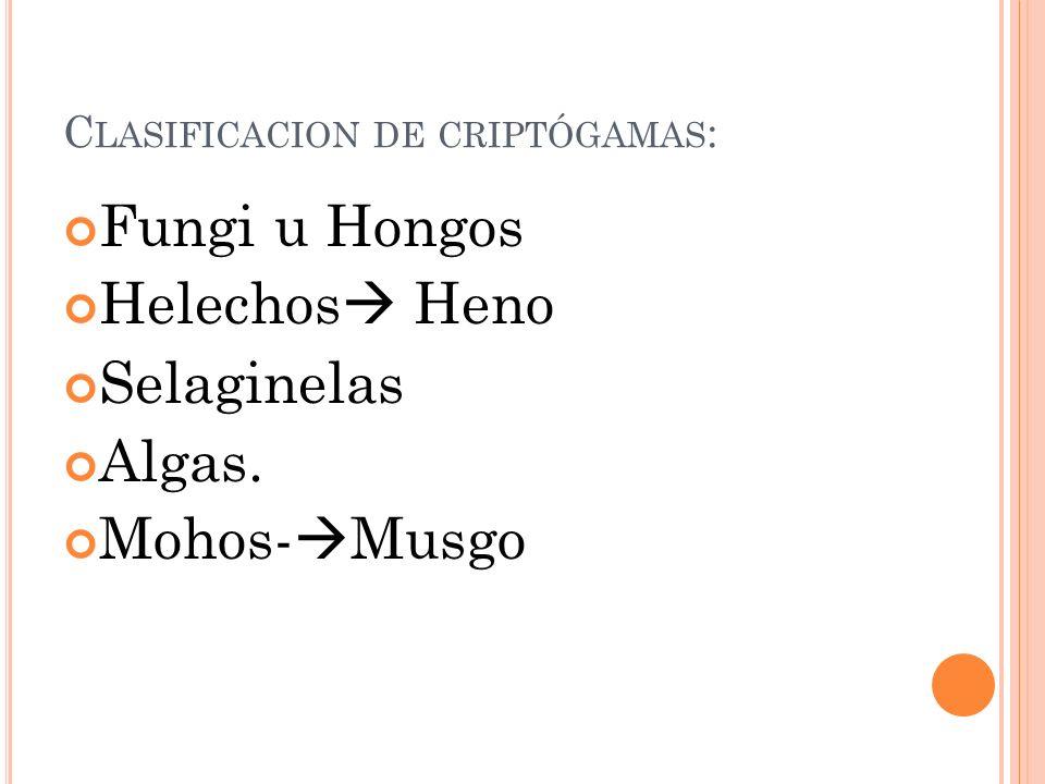 C LASIFICACION DE CRIPTÓGAMAS : Fungi u Hongos Helechos Heno Selaginelas Algas. Mohos- Musgo