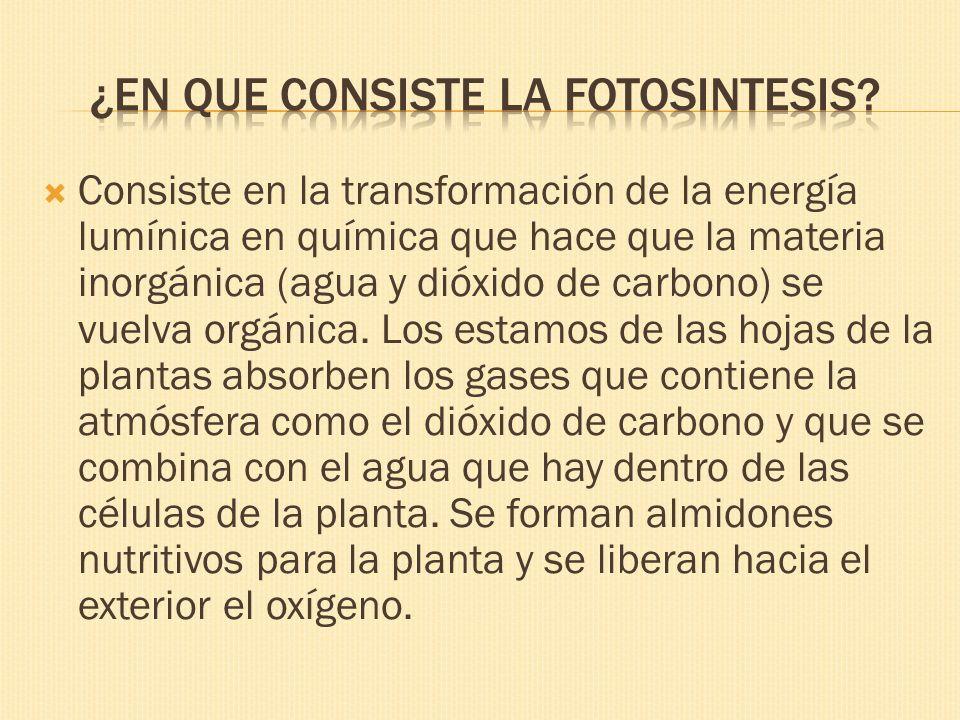 Consiste en la transformación de la energía lumínica en química que hace que la materia inorgánica (agua y dióxido de carbono) se vuelva orgánica. Los