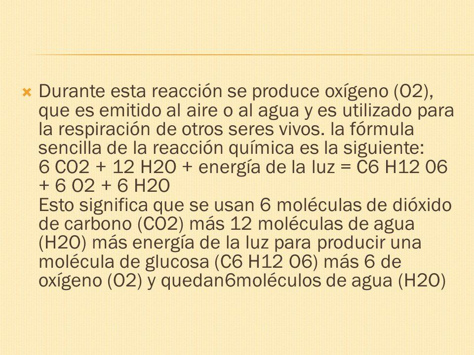 Durante esta reacción se produce oxígeno (O2), que es emitido al aire o al agua y es utilizado para la respiración de otros seres vivos. la fórmula se