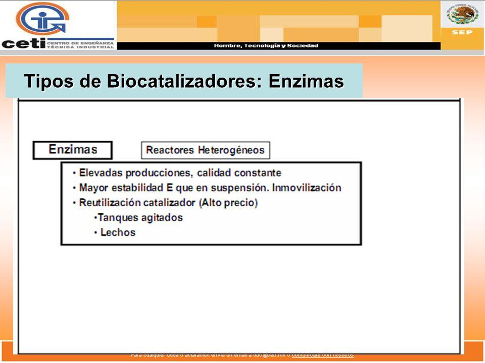 Tipos de Biocatalizadores: Enzimas