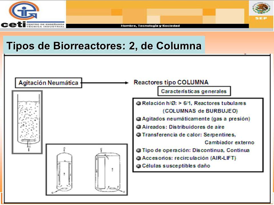 Tipos de Biorreactores: 2, de Columna