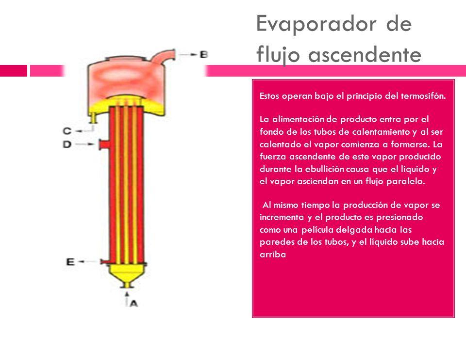 Evaporador de flujo ascendente Estos operan bajo el principio del termosifón. La alimentación de producto entra por el fondo de los tubos de calentami