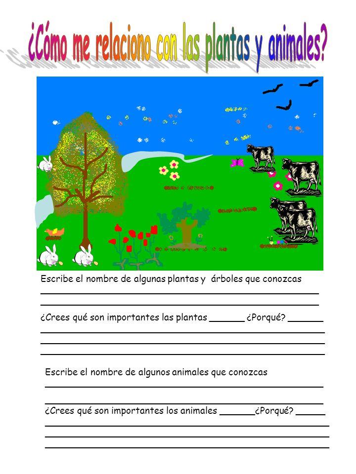 Escribe el nombre de algunas plantas y árboles que conozcas ________________________________________________ _________________________________________