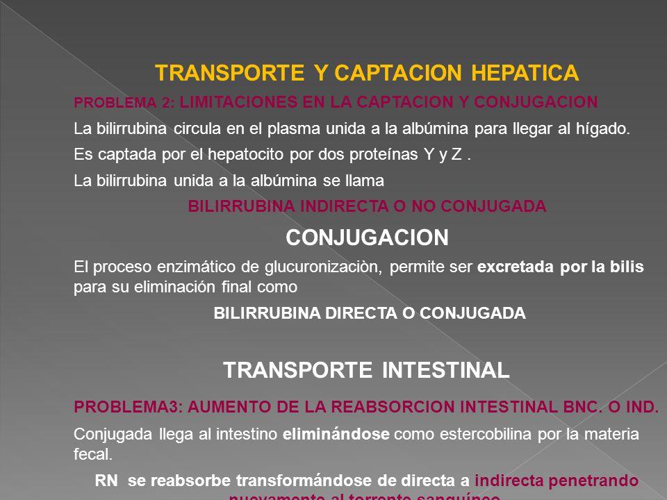 TRANSPORTE Y CAPTACION HEPATICA PROBLEMA 2: LIMITACIONES EN LA CAPTACION Y CONJUGACION La bilirrubina circula en el plasma unida a la albúmina para ll