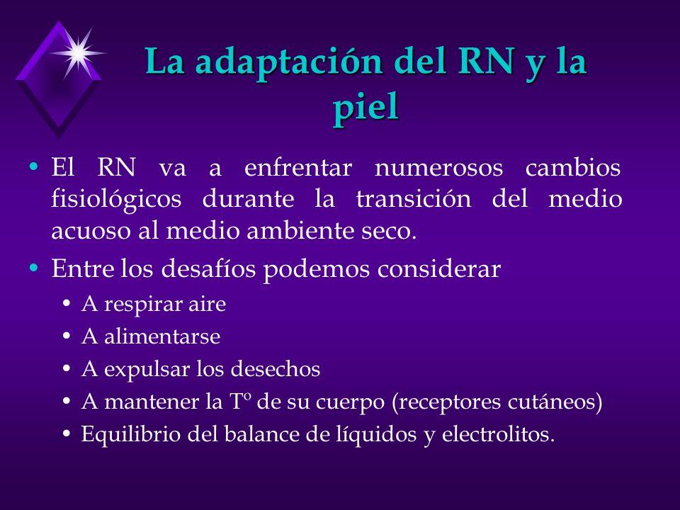 La adaptación del RN y la piel El RN va a enfrentar numerosos cambios fisiológicos durante la transición del medio acuoso al medio ambiente seco. Entr