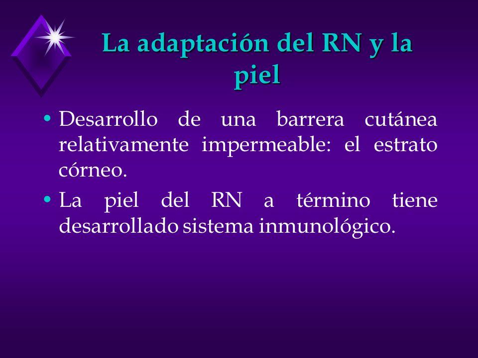 La adaptación del RN y la piel Desarrollo de una barrera cutánea relativamente impermeable: el estrato córneo. La piel del RN a término tiene desarrol
