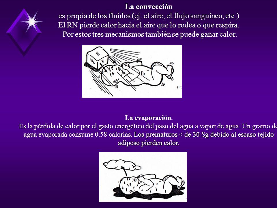 La convección es propia de los fluidos (ej. el aire, el flujo sanguíneo, etc.) El RN pierde calor hacia el aire que lo rodea o que respira. Por estos