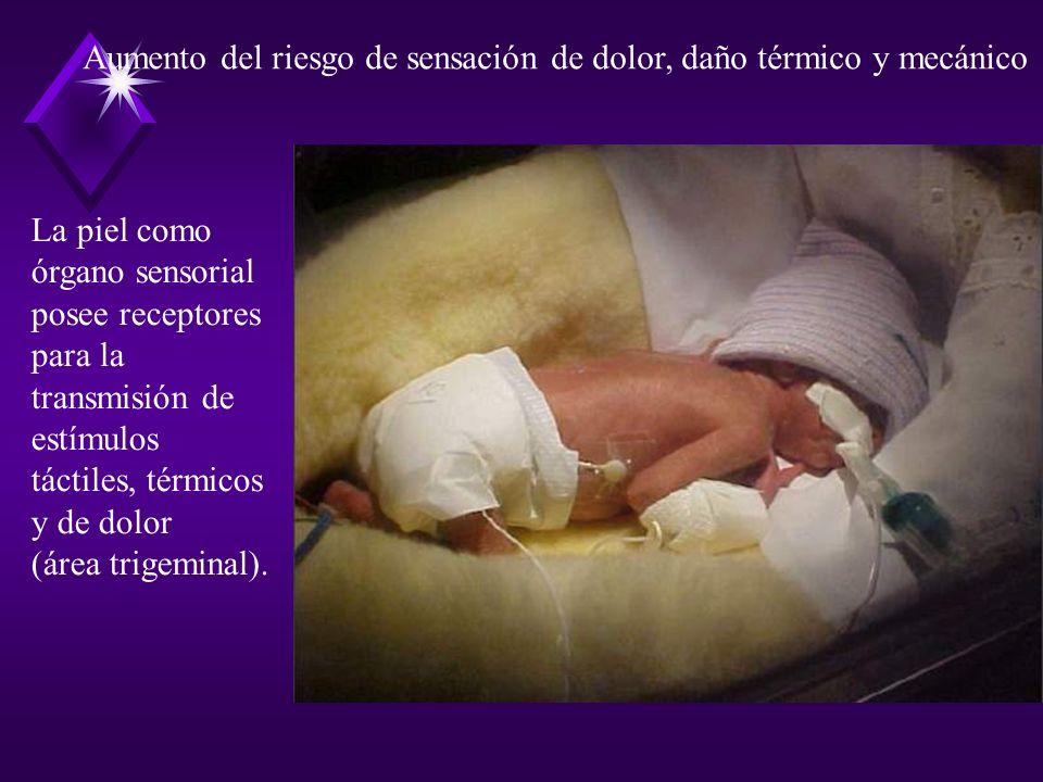 La piel como órgano sensorial posee receptores para la transmisión de estímulos táctiles, térmicos y de dolor (área trigeminal). Aumento del riesgo de