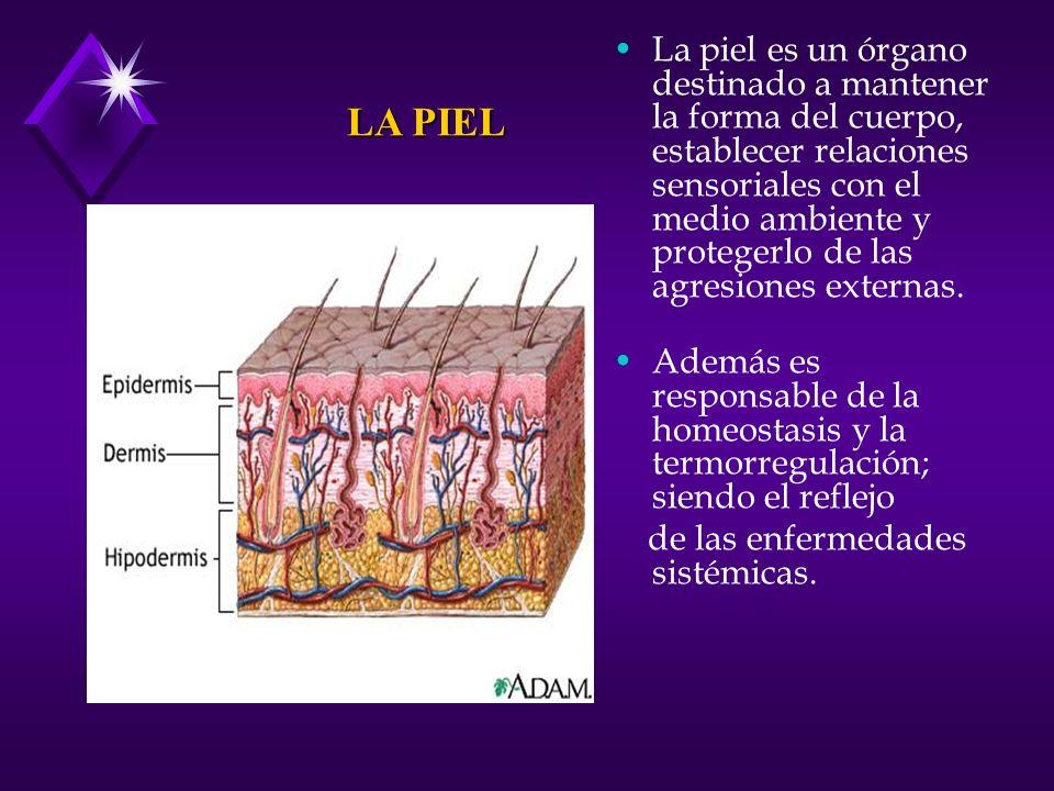 La piel es un órgano destinado a mantener la forma del cuerpo, establecer relaciones sensoriales con el medio ambiente y protegerlo de las agresiones