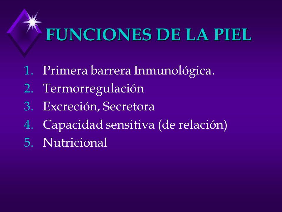 FUNCIONES DE LA PIEL 1.Primera barrera Inmunológica. 2.Termorregulación 3.Excreción, Secretora 4.Capacidad sensitiva (de relación) 5.Nutricional