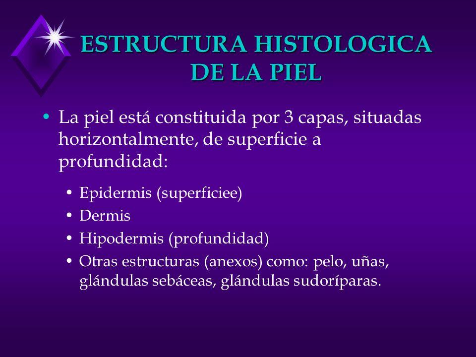 ESTRUCTURA HISTOLOGICA DE LA PIEL La piel está constituida por 3 capas, situadas horizontalmente, de superficie a profundidad: Epidermis (superficiee)