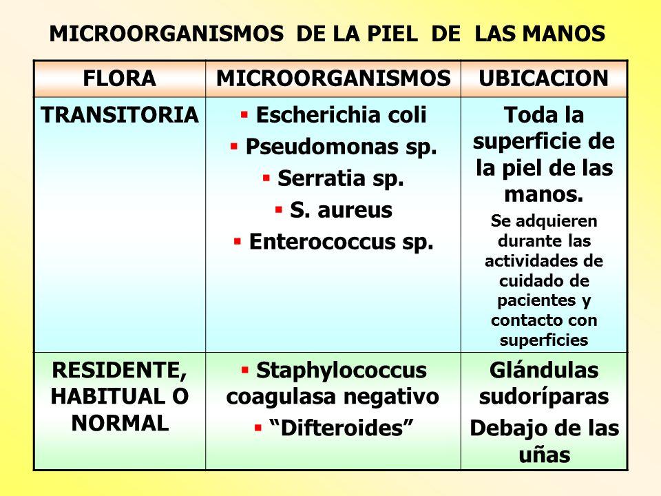 MICROORGANISMOS DE LA PIEL DE LAS MANOS FLORAMICROORGANISMOSUBICACION TRANSITORIA Escherichia coli Pseudomonas sp. Serratia sp. S. aureus Enterococcus