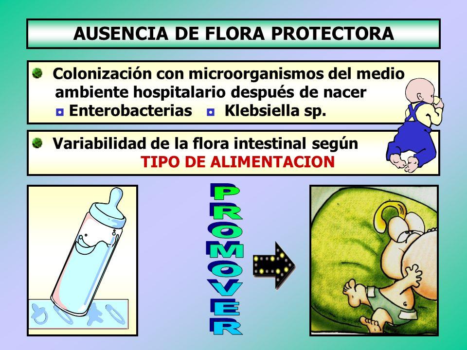 AUSENCIA DE FLORA PROTECTORA Colonización con microorganismos del medio ambiente hospitalario después de nacer Enterobacterias Klebsiella sp. Variabil