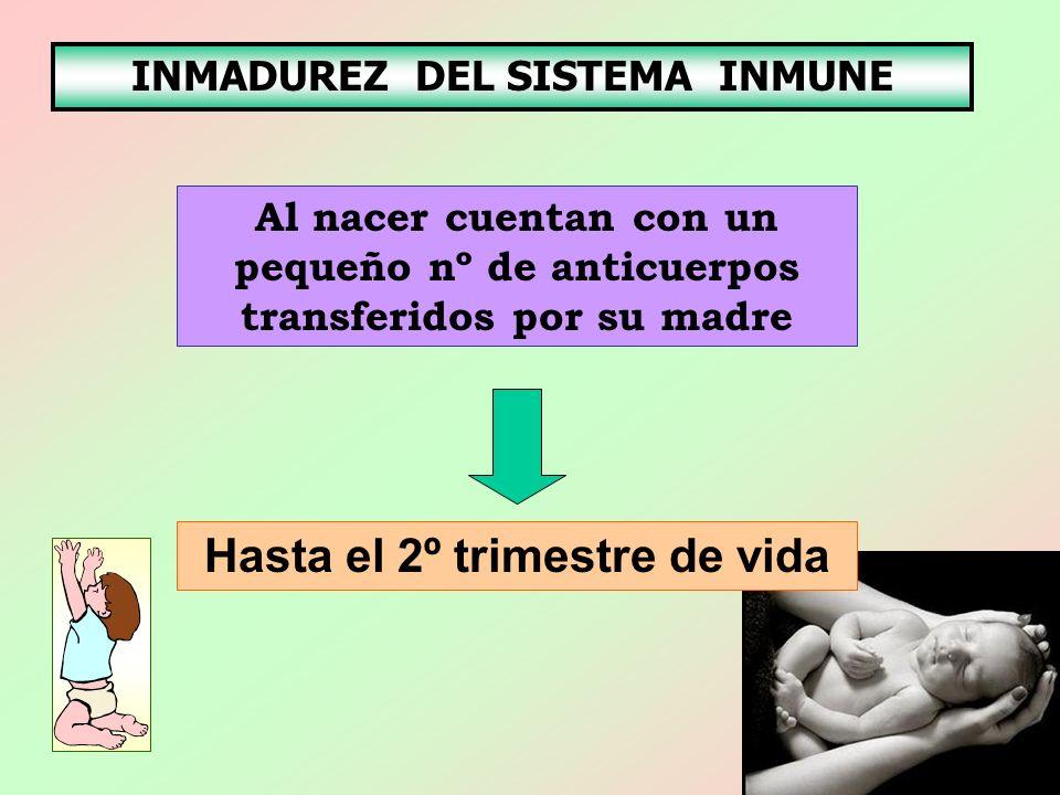 INMADUREZ DEL SISTEMA INMUNE Al nacer cuentan con un pequeño nº de anticuerpos transferidos por su madre Hasta el 2º trimestre de vida
