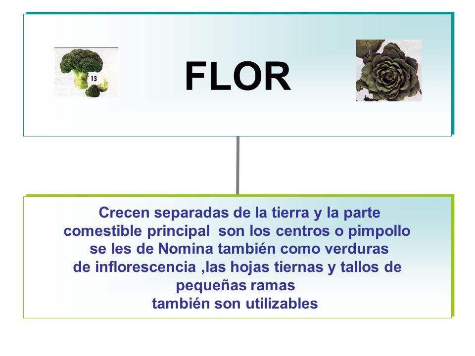 FLOR Crecen separadas de la tierra y la parte comestible principal son los centros o pimpollo se les de Nomina también como verduras de inflorescencia,las hojas tiernas y tallos de pequeñas ramas también son utilizables