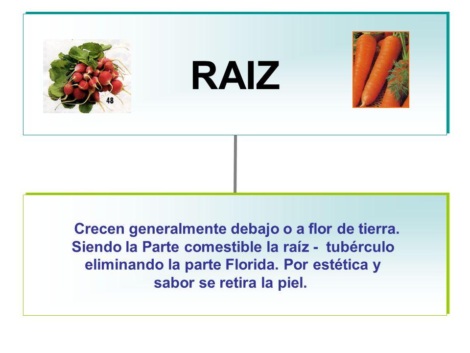 RAIZ Crecen generalmente debajo o a flor de tierra.