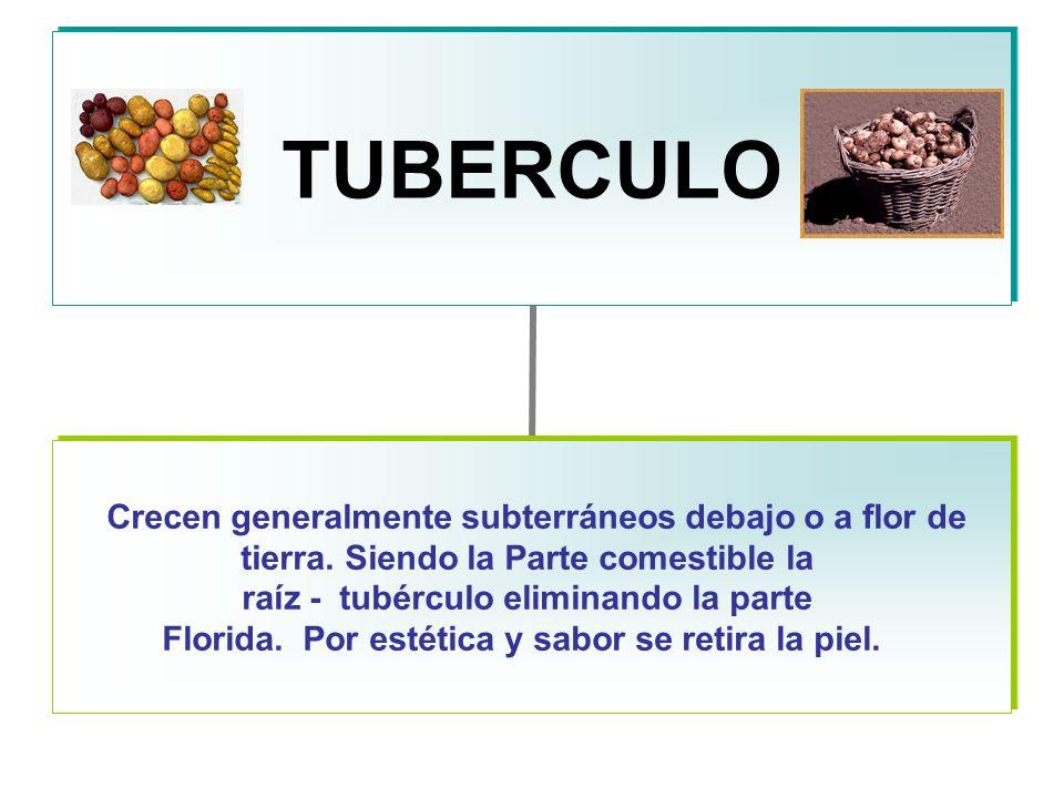 TUBERCULO Crecen generalmente subterráneos debajo o a flor de tierra.