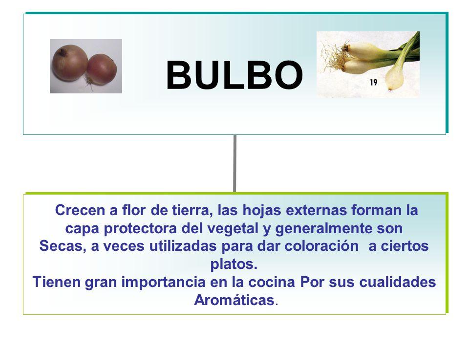 BULBO Crecen a flor de tierra, las hojas externas forman la capa protectora del vegetal y generalmente son Secas, a veces utilizadas para dar coloración a ciertos platos.