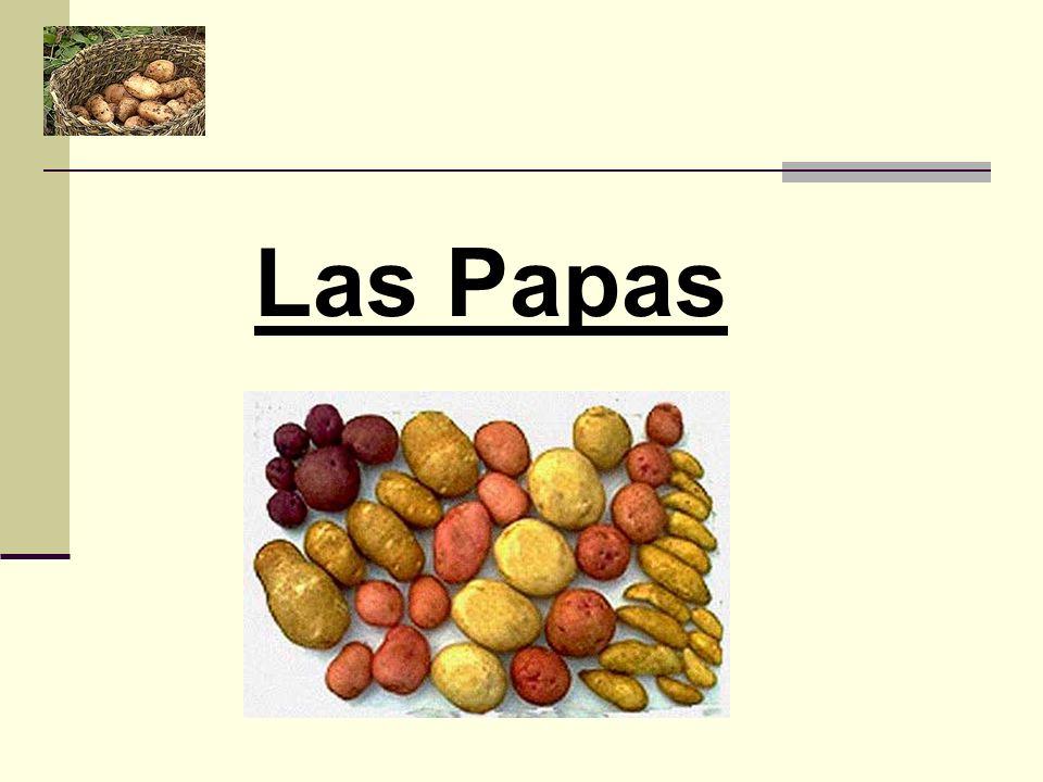 CLASIFICACION DE ACOMPAÑAMIENTOS DE PAPAS Y COCCIONES PAPAS NATURALES PAPAS FRITAS PAPAS DORADAS Y SALTEADAS PAPAS COMO PURE PAPAS COMO MASA DUQUESA