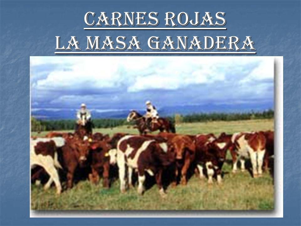 Carnes rojas La Masa Ganadera