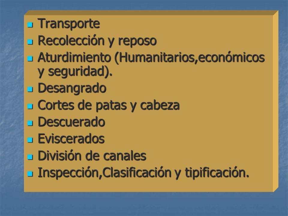 Transporte Transporte Recolección y reposo Recolección y reposo Aturdimiento (Humanitarios,económicos y seguridad). Aturdimiento (Humanitarios,económi
