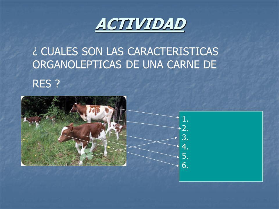 ACTIVIDAD ¿ CUALES SON LAS CARACTERISTICAS ORGANOLEPTICAS DE UNA CARNE DE RES ? 1. 2. 3. 4. 5. 6.